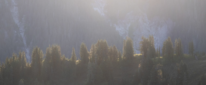 Whatcom, Winchester Mountain - Trees on distant ridge backlit by rising sun