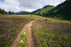 Whatcom, Excelsior - Trail winding through meadows on the way to Excelsior Pass