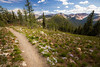 Harts Pass, Windy Pass - Looking down the Pacific Crest Trail towards Harts Pass