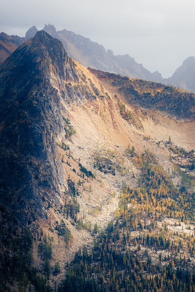 Rainy Pass, Cutthroat Pass - Hinkhouse Peak with side lighting above grove of larch, fog and rain behind, vertical