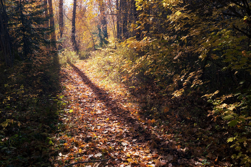 Easton, Pond - Shadows of tall trees on path with fallen leaves