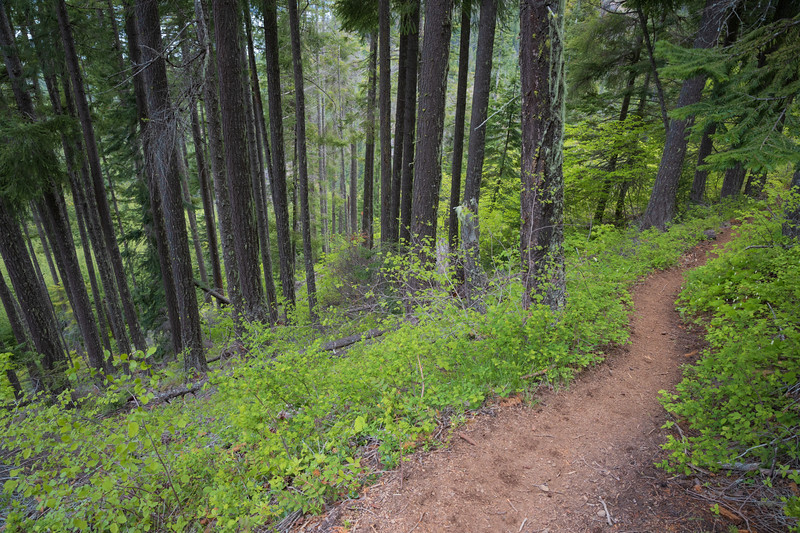 Kittitas, Mt. Baldy - Looking down steep trail in the trees
