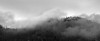 Easton, Pond - Trees on small distant hill with fog, black and white