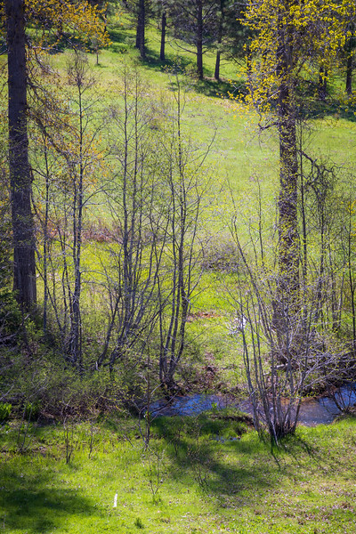 Kittitas, Teanaway - Small creek in a meadow in the forest