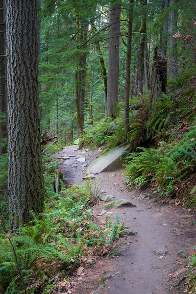 Issaquah, Poo Poo Point - Rocky path through the woods on the Chirico Trail
