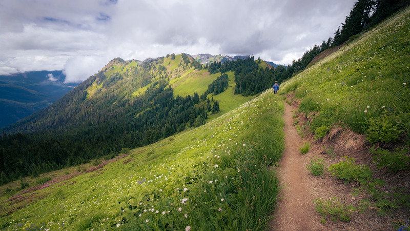 Whatcom, Excelsior - Woman on trail with flower meadows and Church Mountain in the background