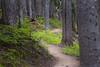 Rainy Pass, Cutthroat Pass - Trail winding between tall trees, telephoto