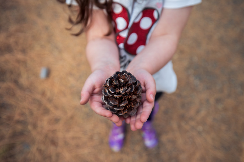 Methow, Falls Creek Falls - Little girl holding large ponderosa pine cone