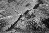 North Cascades, Thornton Lakes - Ridge of trees amongst boulders and granite, black and white
