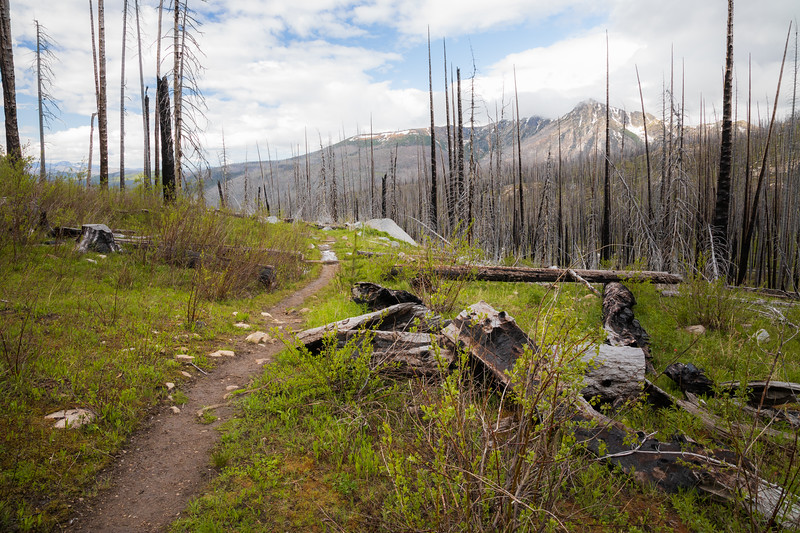 Pasayten, Horseshoe Basin - Trail winding through burned forest with Windy Peak in background