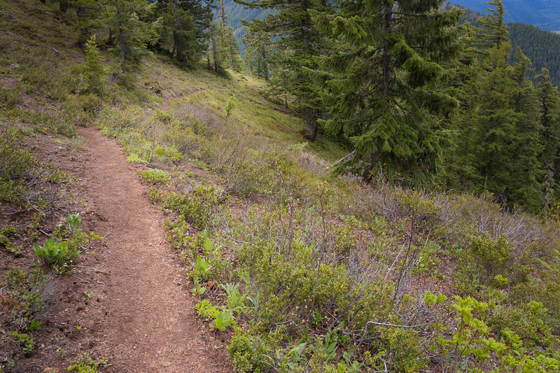 Kittitas, Mt. Baldy - Trail exiting the forest above treeline