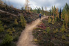 Rainy Pass, Cutthroat Pass - Woman hiker approaching Cutthroat Pass with early larch trees turning