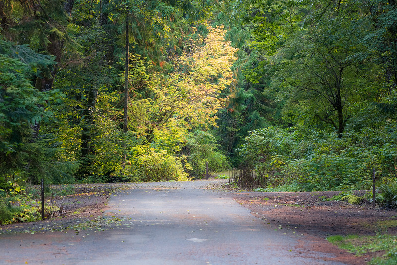 North Cascades, Thunder Creek - Road and trees in the closed Colonial Creek Campground