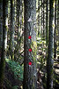 North Bend, Rattlesnake - Trail marker with red signs and 1.0 miles