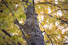 Kittitas, Cle Elum - Close up of branches on a tall tree