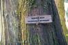 Darrington, North Fork Sauk - Glacier Peak Wilderness Boundary sign on tree