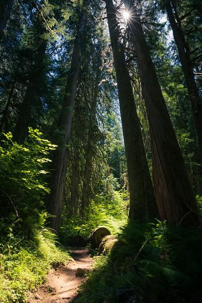 Darrington, North Fork Sauk - Sunstar through trees above trail