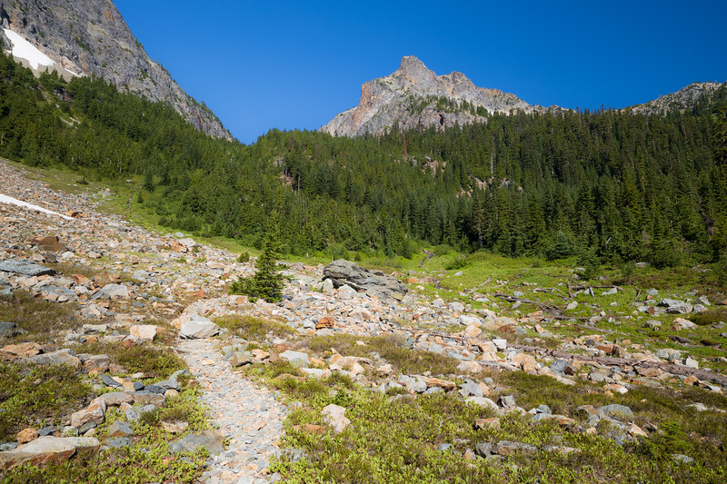 Rainy Pass, Easy Pass - Trail in meadow below trees