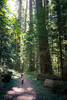 Darrington, North Fork Sauk - Little girl standing on trail and staring up at large tree