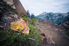 """Snoqualmie Pass, PCT North - Mushroom overturned with """"eat me"""" written on it alongside the PCT"""