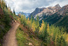 Rainy Pass, Cutthroat Pass - Open hillside with trail, larch, and Porcupine Peak