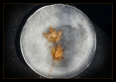 Leaves frozen in the horses' water bowl.