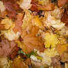 Autumn Leaves ( Eric Clapton and lots of others ) by John Allen