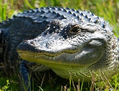 Florida wildlife 103