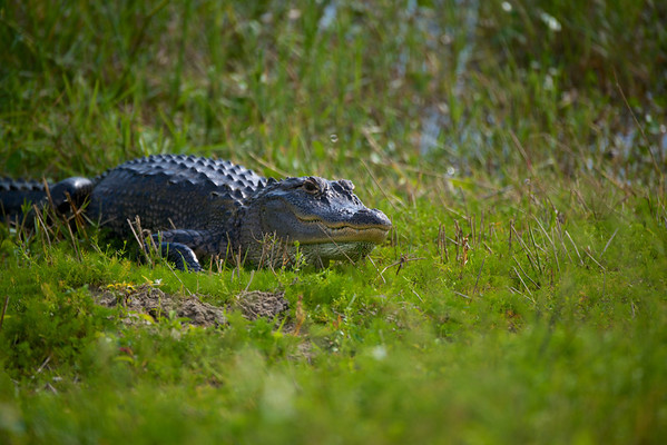 Florida wildlife 101