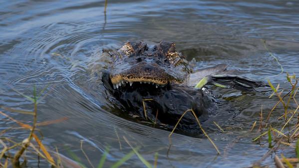 Florida wildlife 222