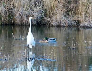 Lake Mattamuskeet 356