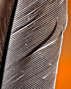 Feather  03 07 09  031