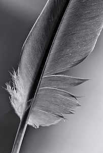 Feather  03 07 09  006