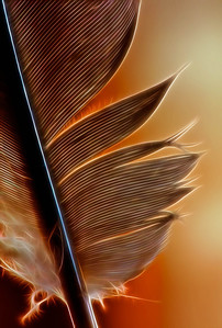 Feather  03 07 09  019