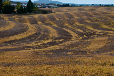 Just passing through New Hamburg, and this field caught my eye. Some interesting patterns here...