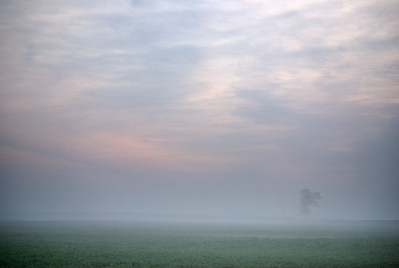 DrivingToWork;KennedyYear2008;Minimalist;Fog;Sunrise-Sunset;Trees