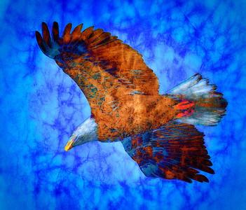 Bald Eagle  02 27 09  018 - Edit - Edit-2 - Edit