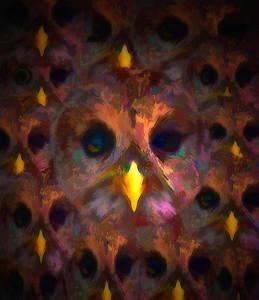 Barred Owl composite 03 - Edit - Edit - Edit-2