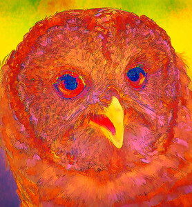 Barred Owl  09 17 10  243 - Edit - Edit