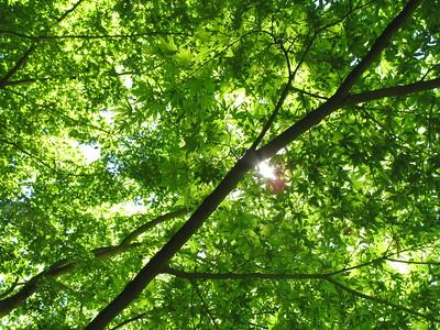 Sun-dappled leaves