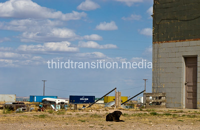 Dog is content, but a bit lonely. Vaughn, New Mexico.