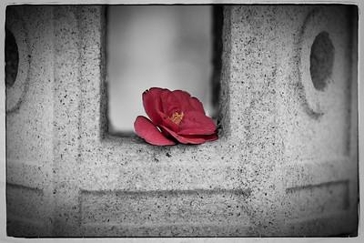 Duke Gardens-3578-Edit