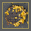 Ginkgo wreath.<br /> <br /> In answer to the question, no I didn't arrange the leaves.  I found them exactly as you see them, cigarette butts and all.  (I almost never groom my photo subjects, beyond removing the odd twig or blade of grass.)