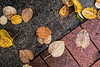 Accidental grouping of katsura leaves
