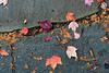 Fall foliage fallen on flagstones