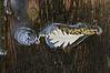 Accidental Assembly:  Oak leaf, oak blossom, bubble, bug.<br /> <br /> Crooked Lake, Michigan<br /> April 19, 2012<br /> (nex5n)