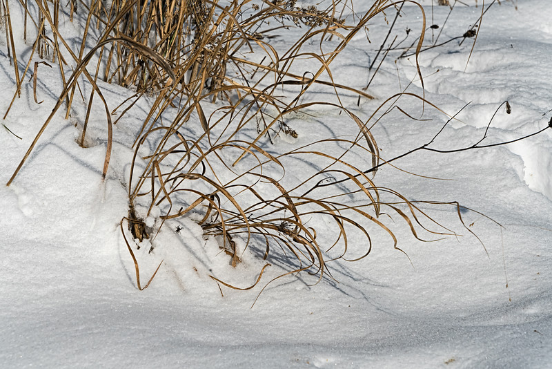 Featured:  Spider in the snow.  Oh, no!