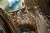 Textures - Palm Bark #2