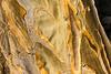 Textures - Aloe bark