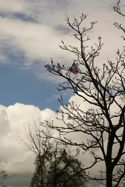 I hate when that happens!<br /> <br /> A lost kite.<br /> Gallup Park,<br /> Ann Arbor, Michigan<br /> May, 2011